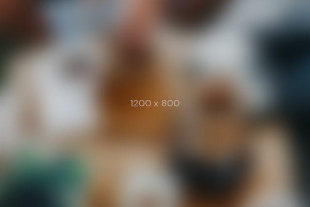 1200×800